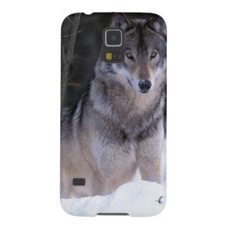 North America, Canada, Eastern Canada, Grey wolf Galaxy S5 Cover