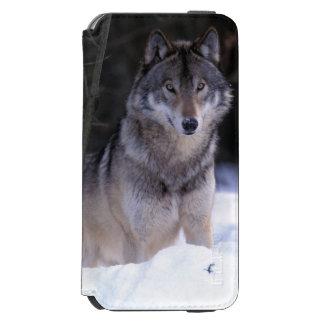 North America, Canada, Eastern Canada, Grey wolf Incipio Watson™ iPhone 6 Wallet Case