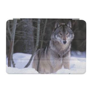 North America, Canada, Eastern Canada, Grey wolf iPad Mini Cover