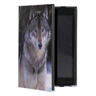 North America, Canada, Eastern Canada, Grey wolf iPad Mini Cover