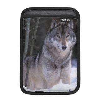 North America, Canada, Eastern Canada, Grey wolf iPad Mini Sleeve
