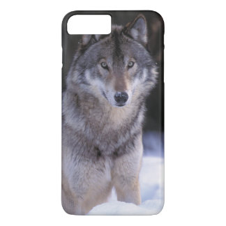 North America, Canada, Eastern Canada, Grey wolf iPhone 8 Plus/7 Plus Case