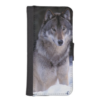 North America, Canada, Eastern Canada, Grey wolf iPhone SE/5/5s Wallet Case