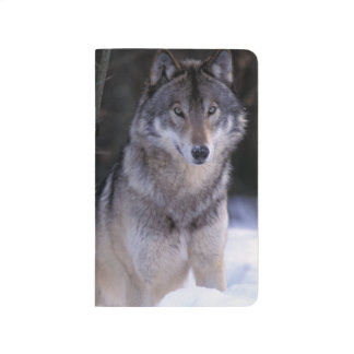 North America, Canada, Eastern Canada, Grey wolf Journal