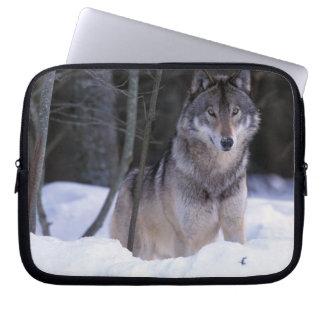 North America, Canada, Eastern Canada, Grey wolf Laptop Sleeve
