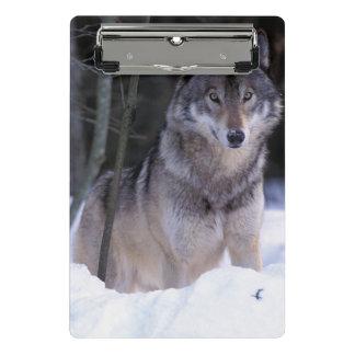North America, Canada, Eastern Canada, Grey wolf Mini Clipboard