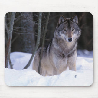 North America, Canada, Eastern Canada, Grey wolf Mouse Mat