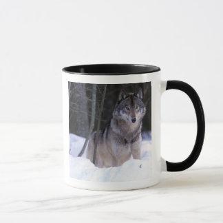 North America, Canada, Eastern Canada, Grey wolf Mug