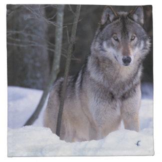 North America, Canada, Eastern Canada, Grey wolf Napkin