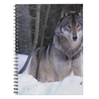 North America, Canada, Eastern Canada, Grey wolf Notebook