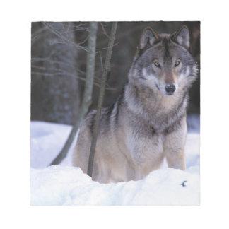 North America, Canada, Eastern Canada, Grey wolf Notepad