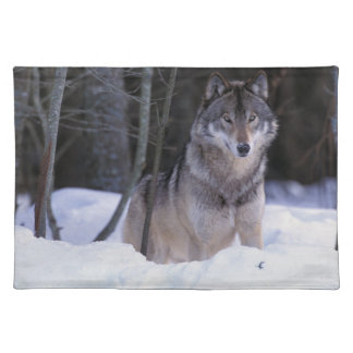North America, Canada, Eastern Canada, Grey wolf Placemat