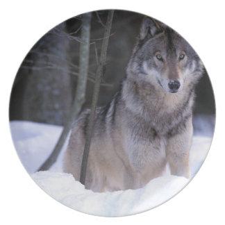 North America, Canada, Eastern Canada, Grey wolf Plates