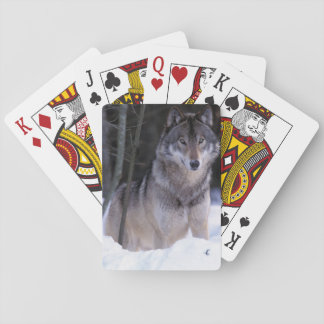 North America, Canada, Eastern Canada, Grey wolf Playing Cards