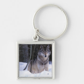 North America, Canada, Eastern Canada, Grey wolf Silver-Colored Square Key Ring