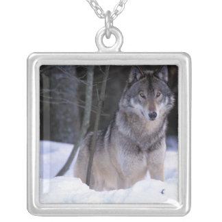 North America, Canada, Eastern Canada, Grey wolf Silver Plated Necklace