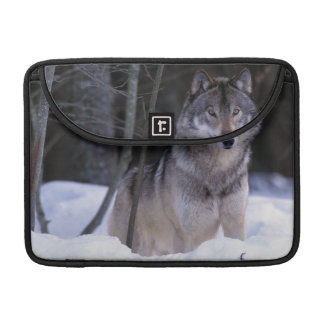 North America, Canada, Eastern Canada, Grey wolf Sleeves For MacBook Pro