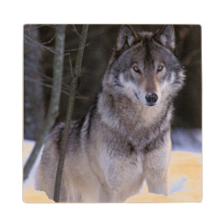 North America, Canada, Eastern Canada, Grey wolf Wood Coaster