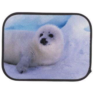 North America, Canada, Gulf of St. Lawrence. 2 Car Mat