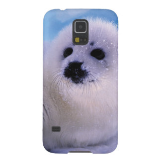 North America, Canada, Gulf of St. Lawrence. 2 Galaxy S5 Cover