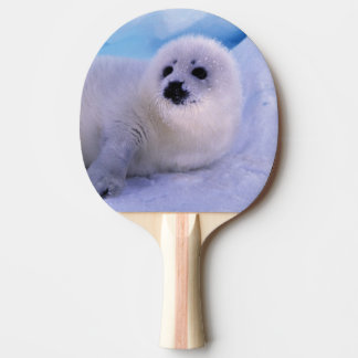 North America, Canada, Gulf of St. Lawrence. 2 Ping Pong Paddle