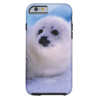 North America, Canada, Gulf of St. Lawrence. 2 Tough iPhone 6 Case