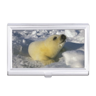 North America, Canada, Gulf of St. Lawrence. 3 Business Card Case