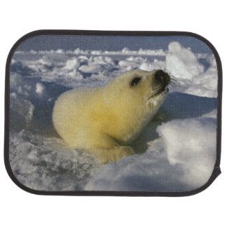 North America, Canada, Gulf of St. Lawrence. 3 Car Mat