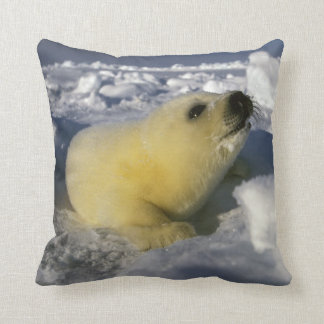 North America, Canada, Gulf of St. Lawrence. 3 Cushion