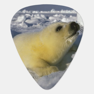 North America, Canada, Gulf of St. Lawrence. 3 Guitar Pick