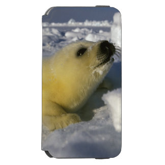 North America, Canada, Gulf of St. Lawrence. 3 Incipio Watson™ iPhone 6 Wallet Case