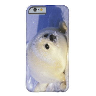North America, Canada, Gulf of St. Lawrence. 4 Barely There iPhone 6 Case