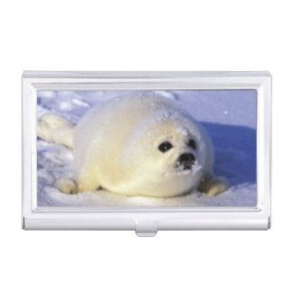 North America, Canada, Gulf of St. Lawrence. 4 Business Card Holder