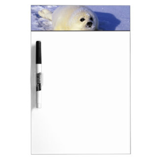 North America, Canada, Gulf of St. Lawrence. 4 Dry Erase Board