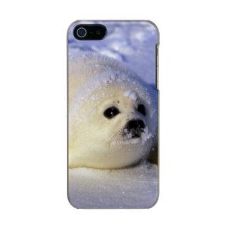 North America, Canada, Gulf of St. Lawrence. 4 Incipio Feather® Shine iPhone 5 Case