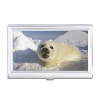 North America, Canada, Gulf of St. Lawrence. 5 Business Card Holder