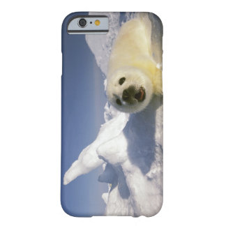 North America, Canada, Gulf of St. Lawrence. 5 Barely There iPhone 6 Case