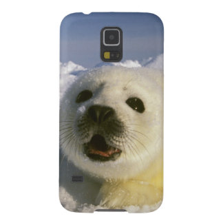 North America, Canada, Gulf of St. Lawrence. 5 Case For Galaxy S5