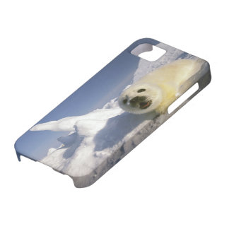North America, Canada, Gulf of St. Lawrence. 5 Case For The iPhone 5