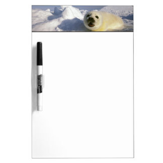 North America, Canada, Gulf of St. Lawrence. 5 Dry Erase Board