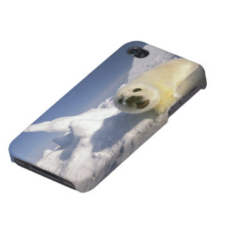 North America, Canada, Gulf of St. Lawrence. 5 iPhone 4 Covers