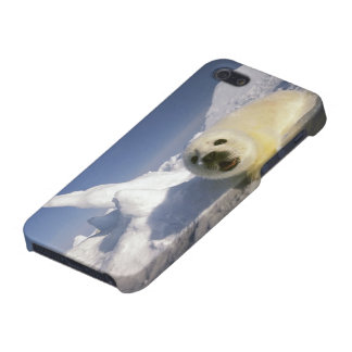 North America, Canada, Gulf of St. Lawrence. 5 iPhone 5 Cover