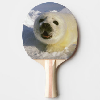 North America, Canada, Gulf of St. Lawrence. 5 Ping Pong Paddle