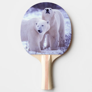 North America, Canada, Manitoba, Churchill. 2 Ping Pong Paddle