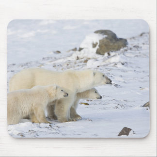 North America, Canada, Manitoba, Churchill. 4 Mouse Mat