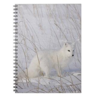 North America, Canada, Manitoba, Churchill. 4 Notebooks