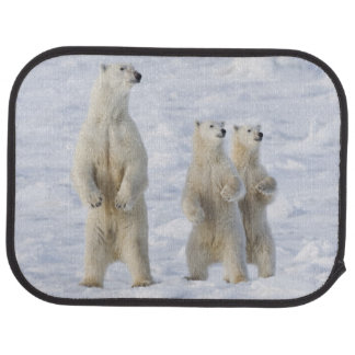 North America, Canada, Manitoba, Churchill. 5 Car Mat