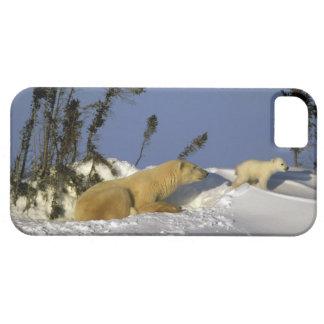 North America, Canada, Manitoba, Churchill. 5 Case For The iPhone 5
