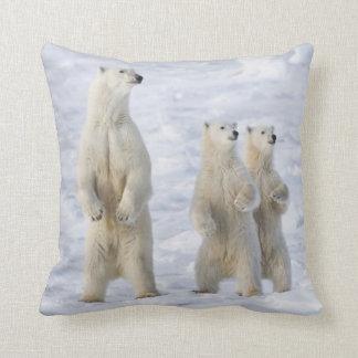 North America, Canada, Manitoba, Churchill. 5 Cushion