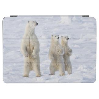 North America, Canada, Manitoba, Churchill. 5 iPad Air Cover